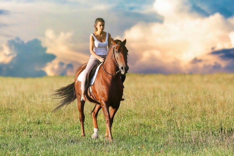 hästjurist, Vad gör en hästjurist?, Rättsakuten