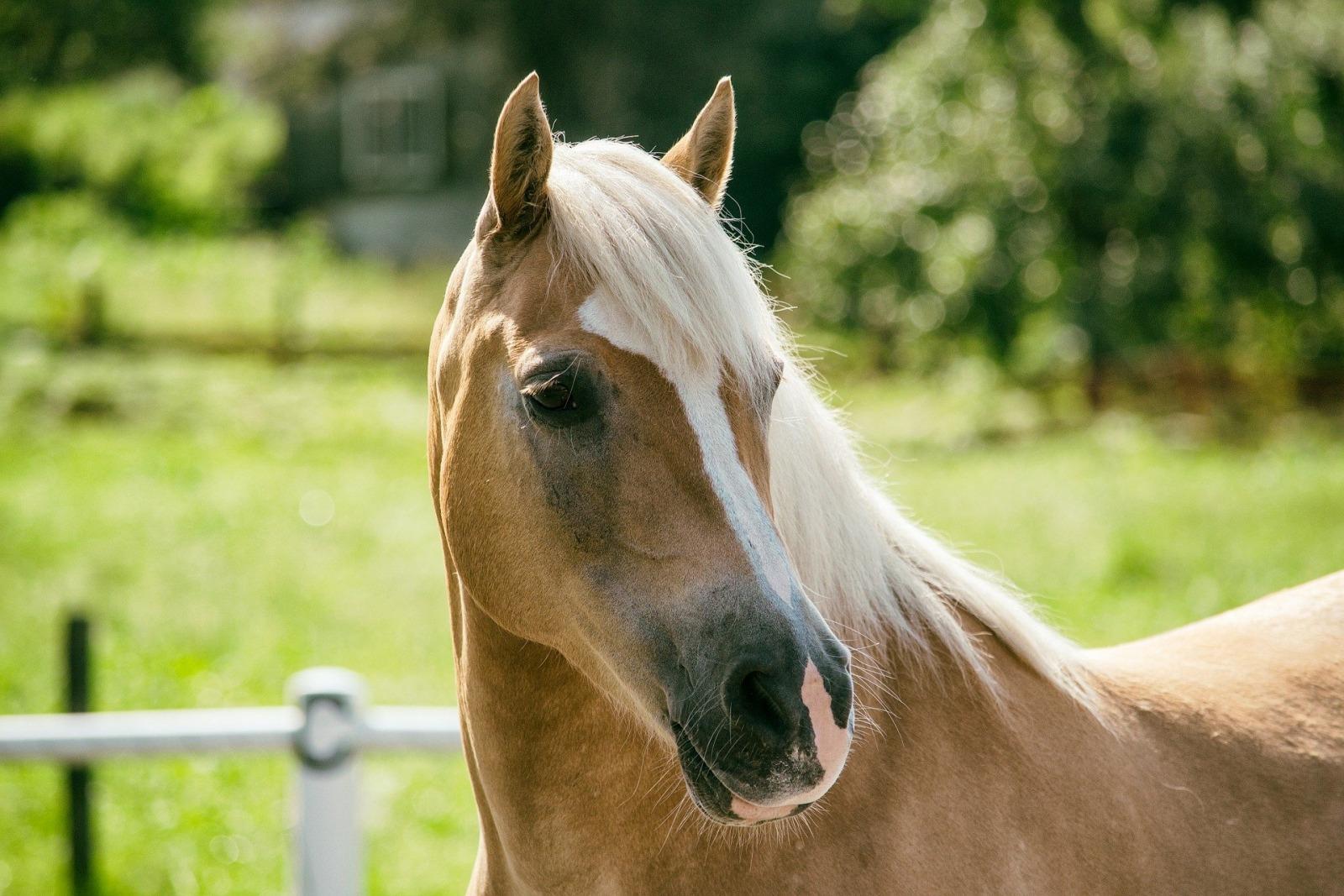 Köp av häst - konsumentköplagen och köplagen, Köp av häst – Konsumentköplagen och köplagen, Rättsakuten